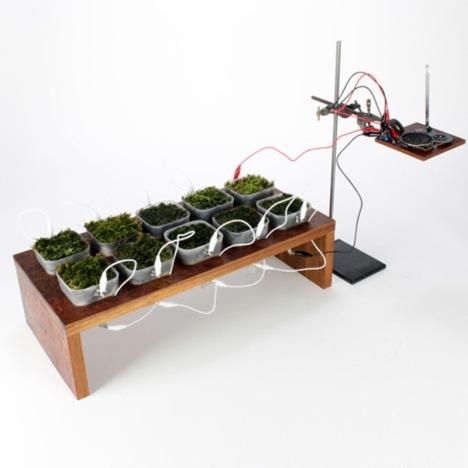 Pesquisadores-extraem-energia-elétrica-de-plantas